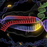 """DARPA agencia militar USA """"extinción genética"""""""